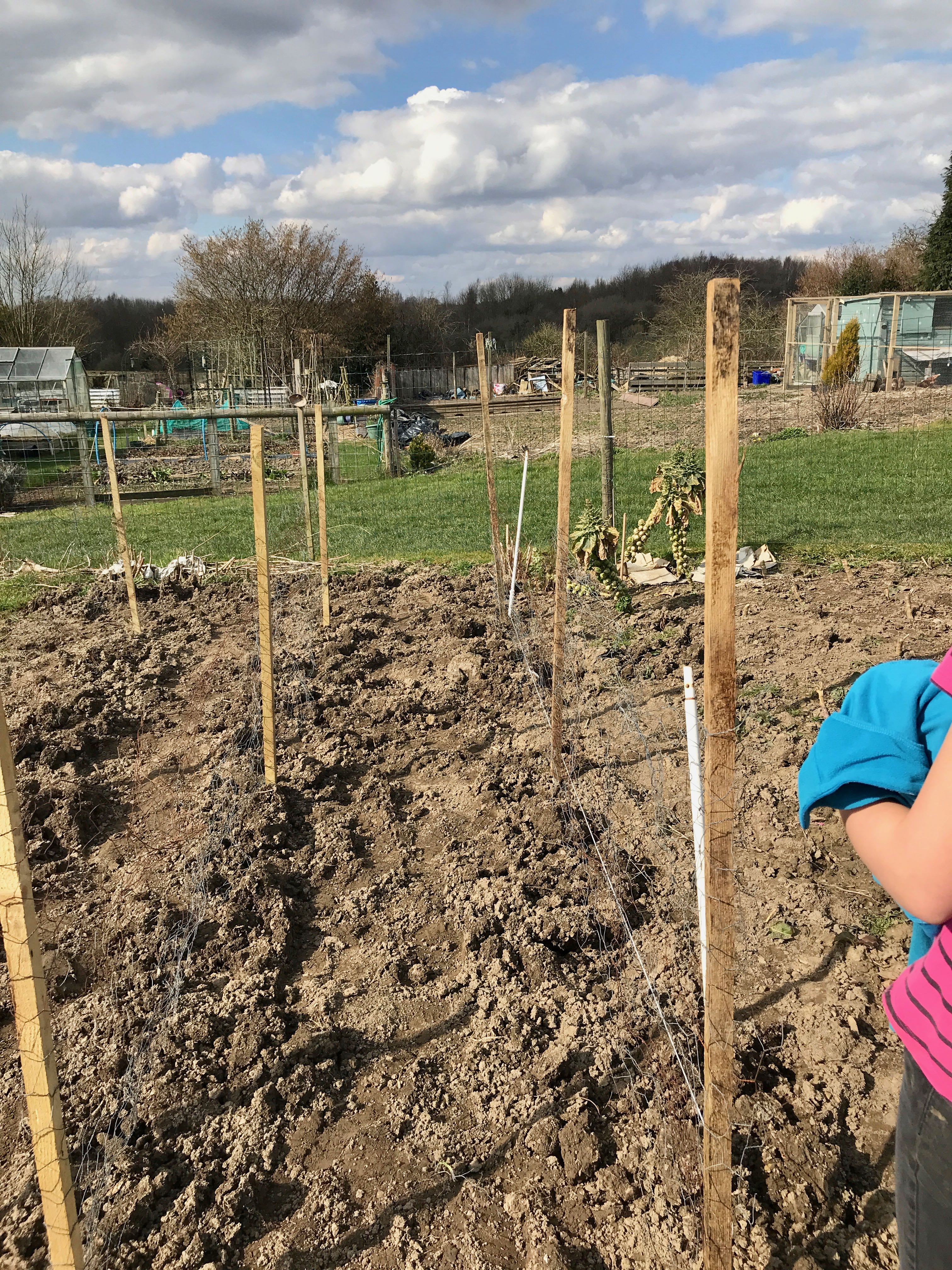 structure for the peas to grow up paths